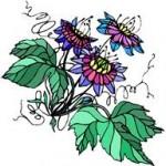 Sommeil et Phytothérapie... Des exemples concrets de plantes favorisant l