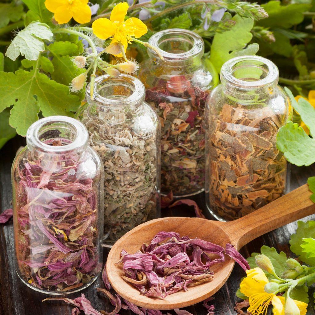 cours sur les 21 plantes médicinales les herbes aromatiques miraculeuses